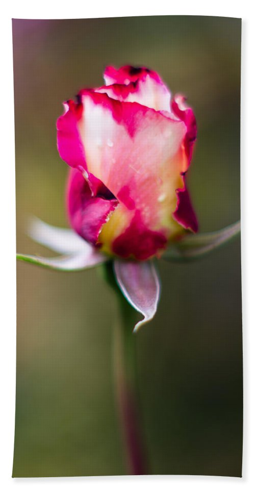 Rose Bath Sheet featuring the photograph Half-a-rose by Greg Nyquist