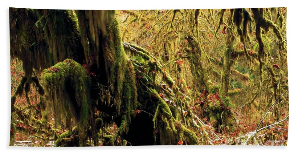 Hoh Rainforest Hand Towel featuring the photograph Hall Of Mosses by Adam Jewell