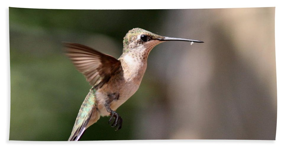 Hummingbird Bath Sheet featuring the photograph Hanger by Travis Truelove