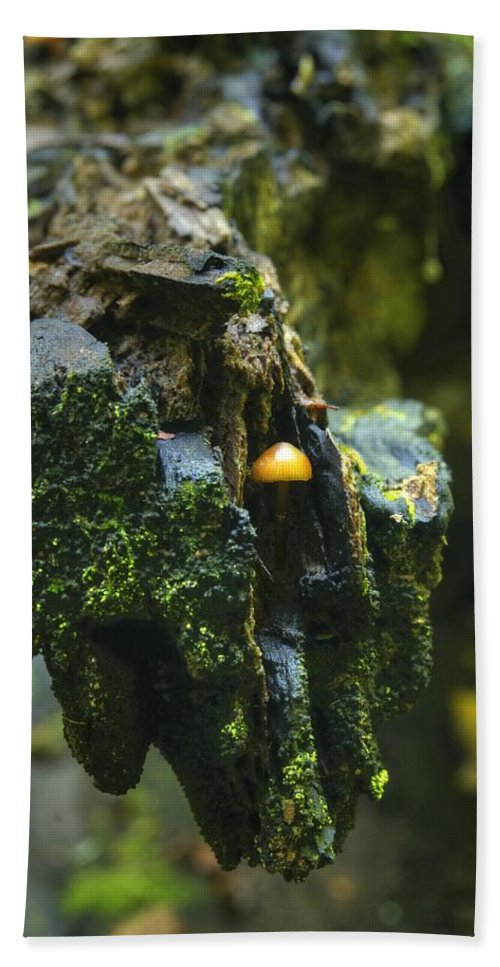 Mushroom Hand Towel featuring the photograph Hanging In There by Michael Peychich