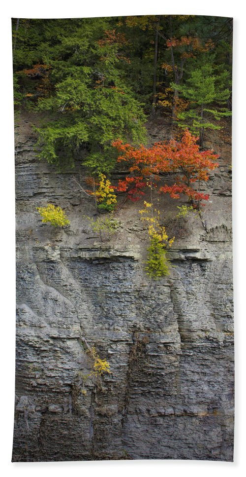 Trees Hand Towel featuring the photograph Hanging On by Rick Berk