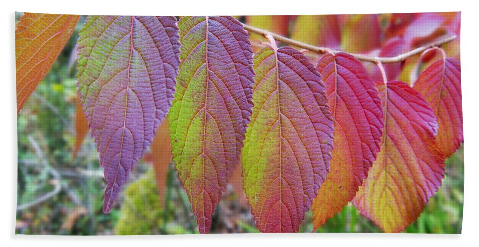 Fall Leaves Hand Towel featuring the photograph Hanging Out To Dry No. 2 by Belinda Greb