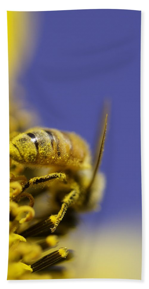 Bee Hand Towel featuring the photograph Hard Worker by Danielle Silveira