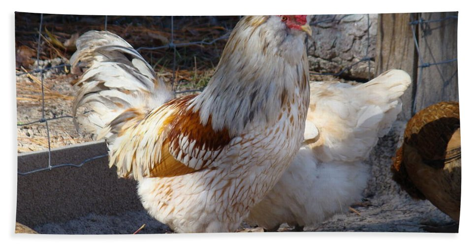 Rooster Bath Sheet featuring the photograph Harley by Michael MacGregor