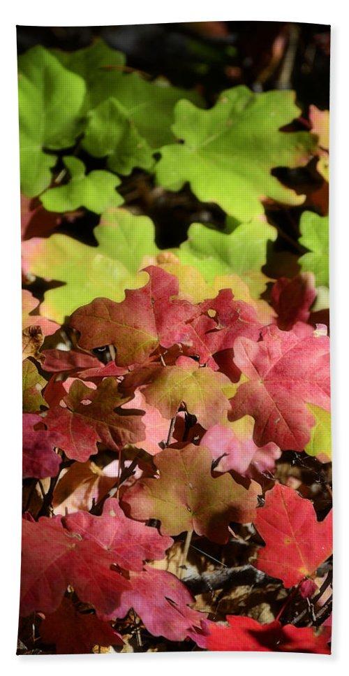Fall Colors Bath Sheet featuring the photograph Harmony by Saija Lehtonen