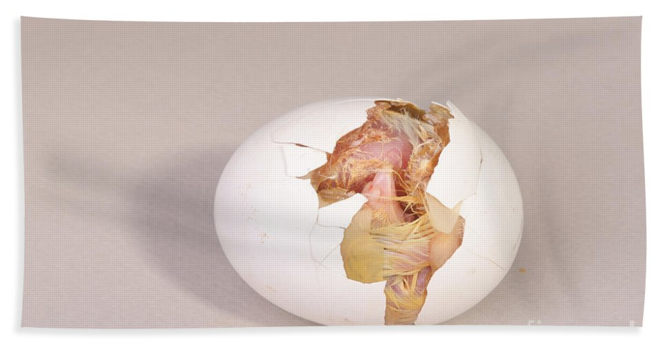 Egg Hand Towel featuring the Hatching Chicken 8 Of 22 by Ted Kinsman