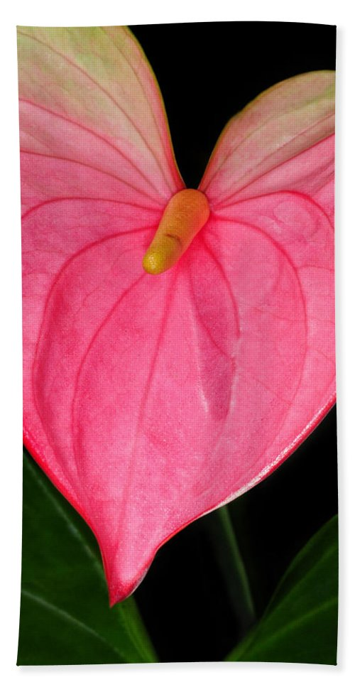 Calla Lily Bath Sheet featuring the photograph Have A Heart by Dave Mills