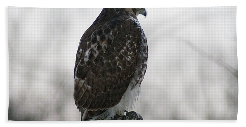 Hawk Hand Towel featuring the photograph Hawk 1 by Joe Faherty