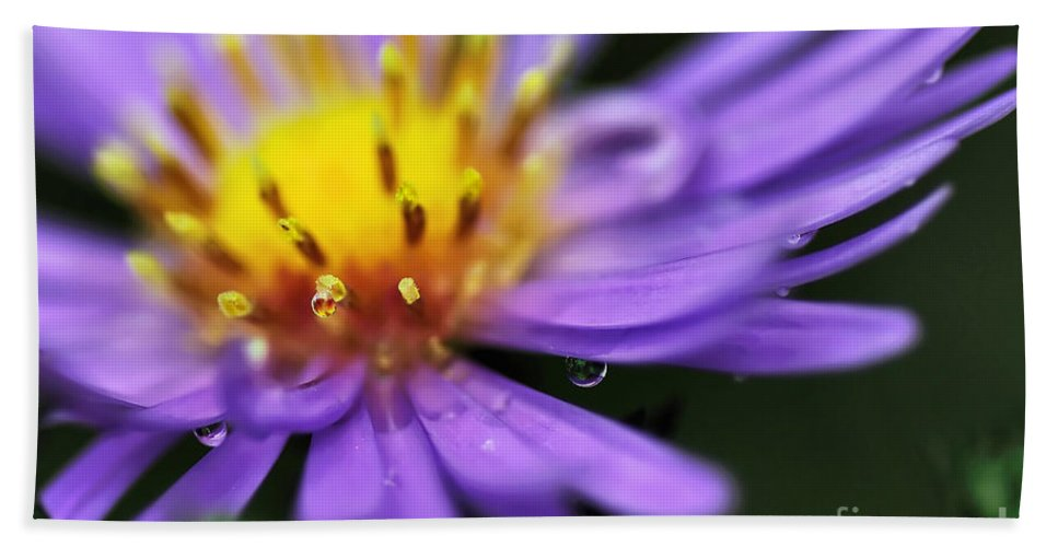 Photography Hand Towel featuring the photograph Hazy Daisy... With Droplets by Kaye Menner
