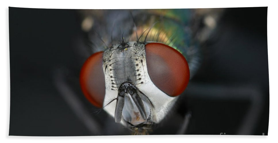 Blow Fly Hand Towel featuring the photograph Head Of A Green Blow Fly by Ted Kinsman