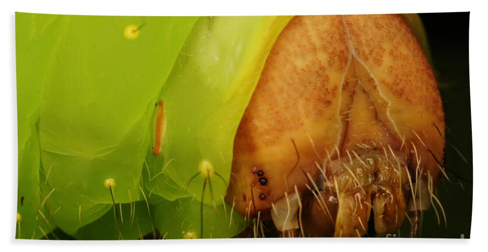 Moth Hand Towel featuring the photograph Head Of Polyphemus Caterpillar by Ted Kinsman