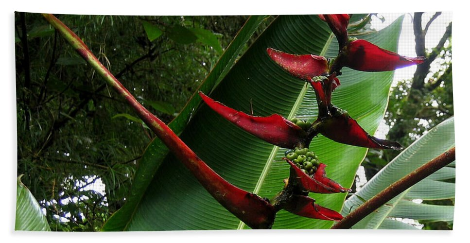 Heliconia Bath Sheet featuring the photograph Heliconia by RicardMN Photography