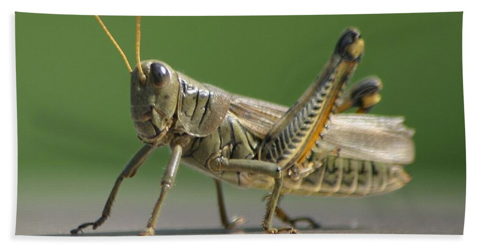 Grasshopper Bath Sheet featuring the photograph Hello Whatcha Doing by Living Color Photography Lorraine Lynch