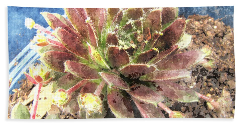 Nature Bath Sheet featuring the digital art Hen And Chicks Plant by Debbie Portwood