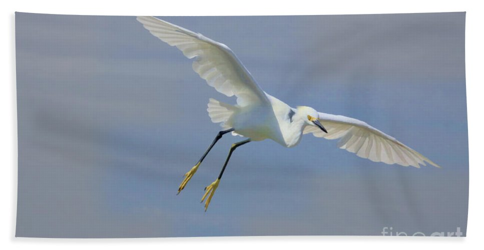 Egret Bath Towel featuring the photograph Here I Come by Deborah Benoit
