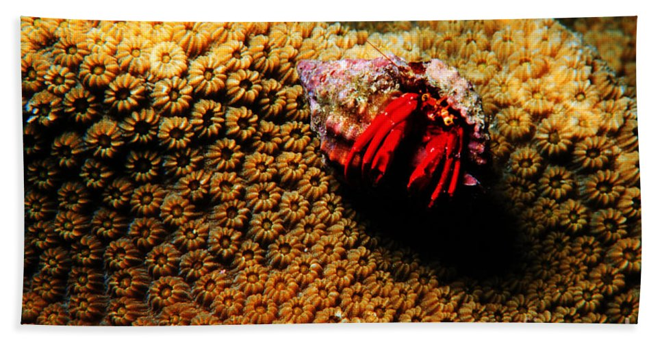 Hermit Crab Hand Towel featuring the photograph Hermit Crab On Coral by Mike Nellums