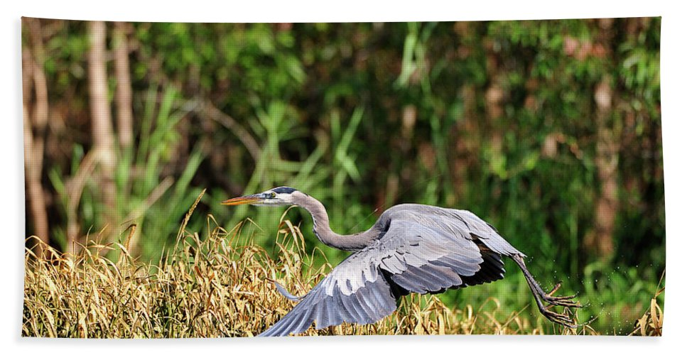 Great Blue Heron Hand Towel featuring the photograph Heron Flying Along The River Bank by Bill Dodsworth