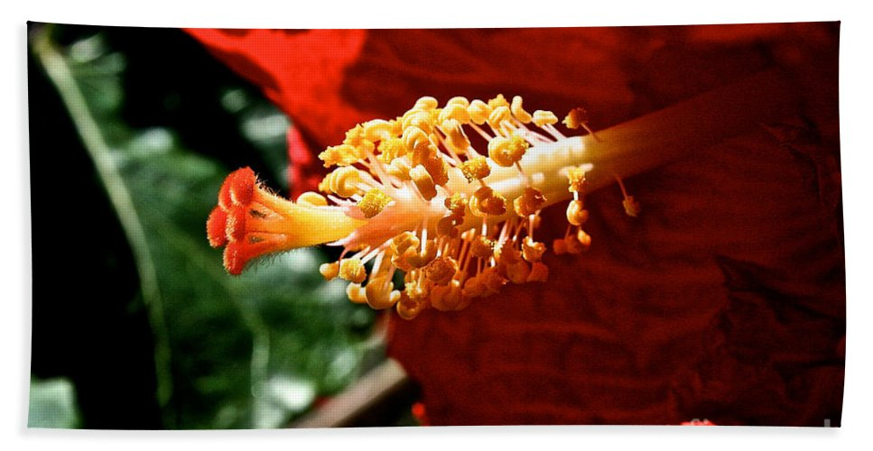 Plant Hand Towel featuring the photograph Hibiscus Highlight by Susan Herber