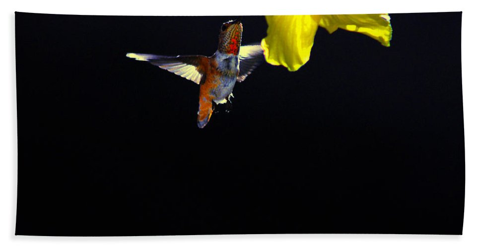 Hummer Bath Towel featuring the photograph Hibiscus Hummer On Black by Lynn Bauer