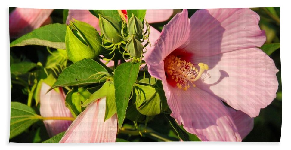 Hibiscus Hand Towel featuring the photograph Hibiscus In Summer by Angie Tirado