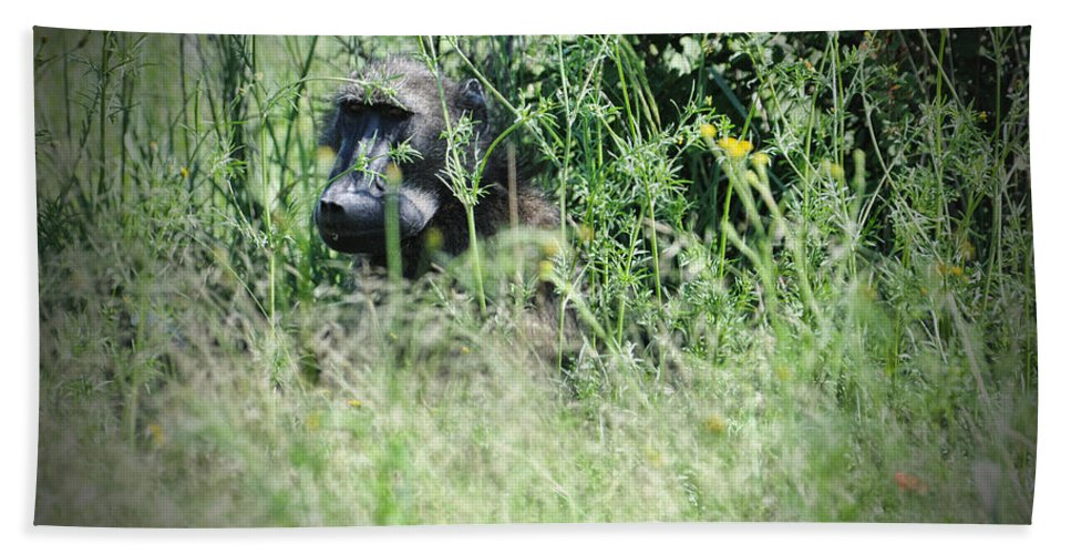 Baboon Bath Sheet featuring the photograph Hiding In Tall Grass by Douglas Barnard