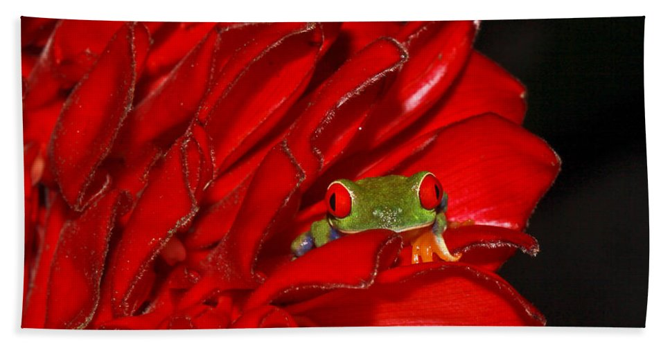 Frog Bath Sheet featuring the photograph Hiding by Tom and Pat Cory