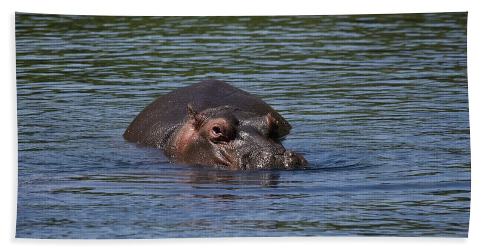 Adult Bath Sheet featuring the photograph Hippo by Howard Kennedy