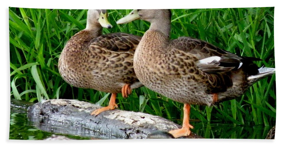 Ducks Hand Towel featuring the photograph Hokey-pokey by Lainie Wrightson