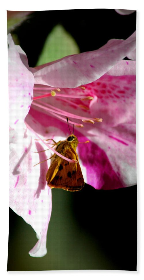 Butterfly Bath Sheet featuring the photograph Home Sweet Home by David Weeks