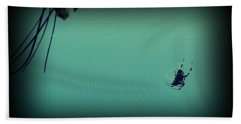 Spider Hand Towel featuring the photograph Home Sweet Home by Priscilla Richardson