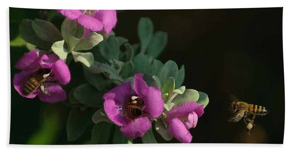 Backyard Bath Sheet featuring the photograph Honey Bees On Sage 2 by Sean Wray
