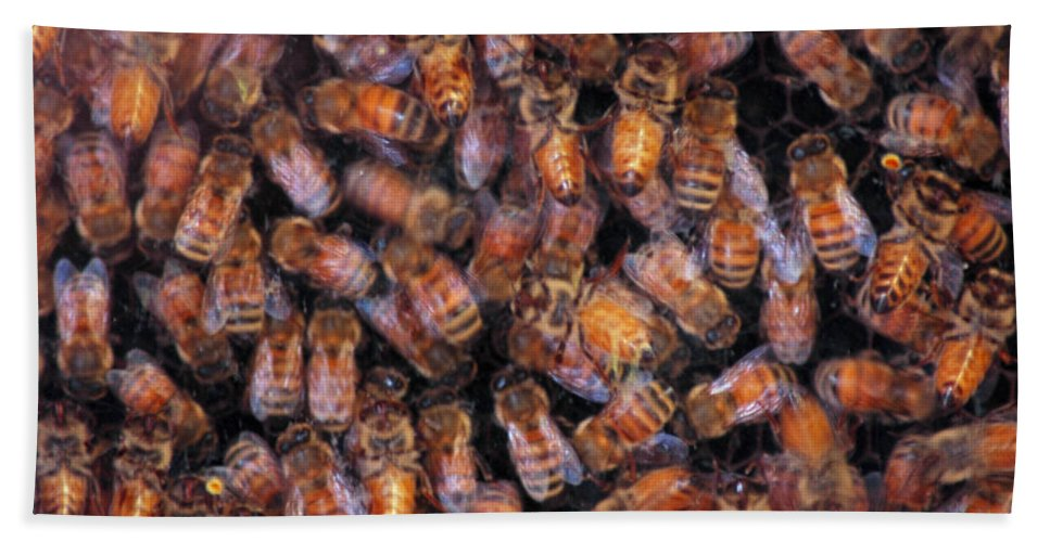 Animals Bath Sheet featuring the photograph Honey Honey by LeeAnn McLaneGoetz McLaneGoetzStudioLLCcom