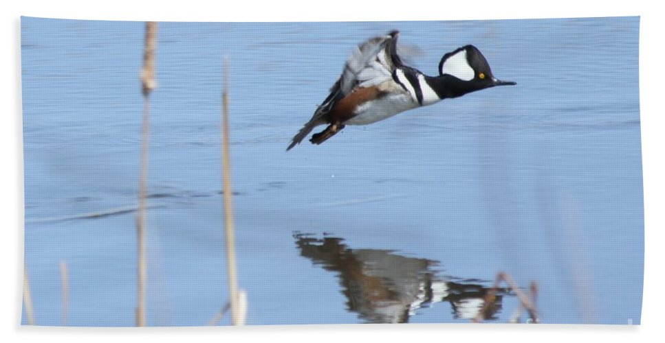 Hodded Hand Towel featuring the photograph Hooded Merganser Flying by Lori Tordsen
