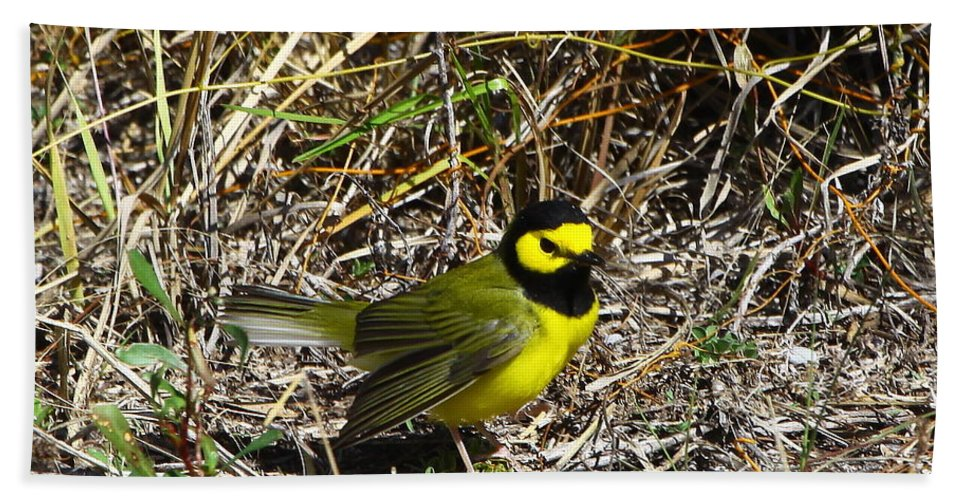 Hooded Warbler Hand Towel featuring the photograph Hooded Warbler by Barbara Bowen