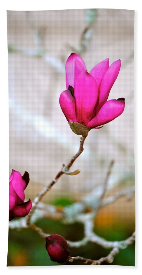 Pink Magnolia Print Hand Towel featuring the photograph Hope by Deborah M Rinaldi