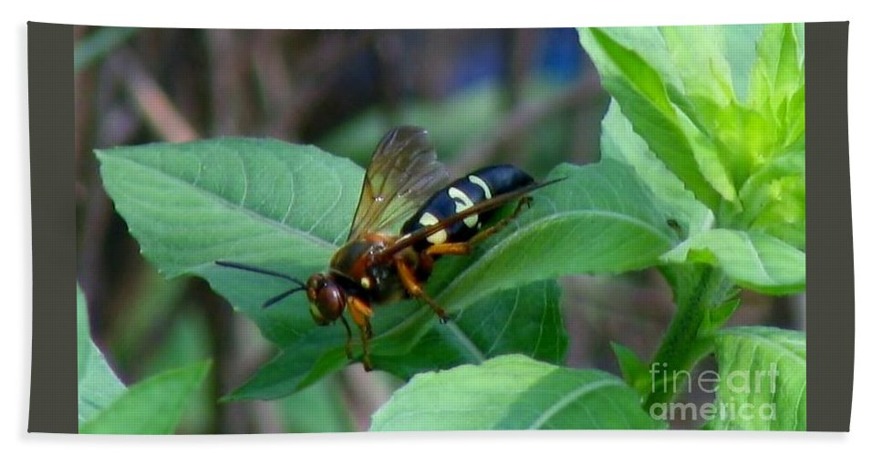 Bee Hand Towel featuring the photograph Hornet by Art Dingo