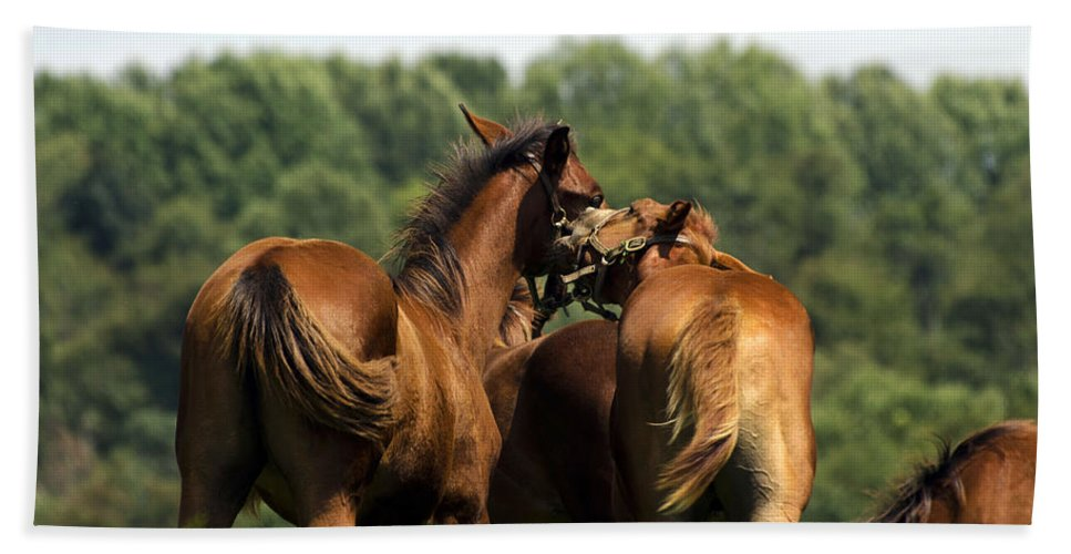 Horse Bath Sheet featuring the photograph Horse Foul Play IIi by Terri Winkler