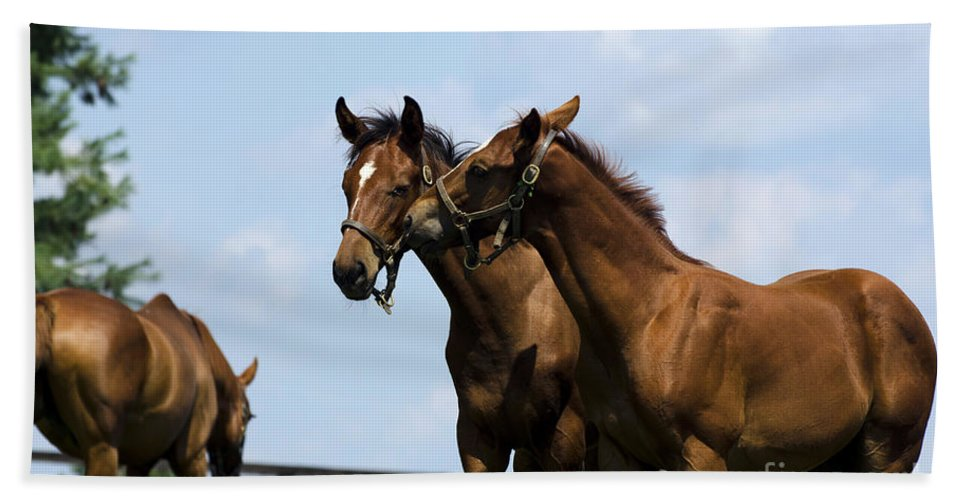 Horse Bath Sheet featuring the photograph Horse Foul Play Vi by Terri Winkler