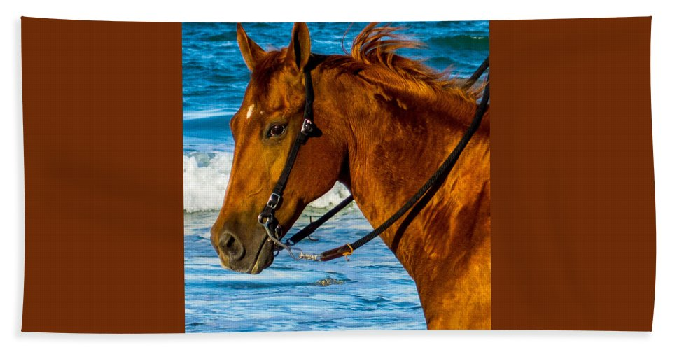Horse Hand Towel featuring the photograph Horse Portrait by Shannon Harrington