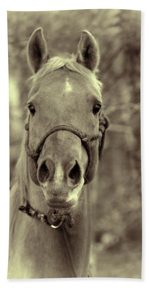 Horse Bath Sheet featuring the photograph Horse Stare by Kathy Clark