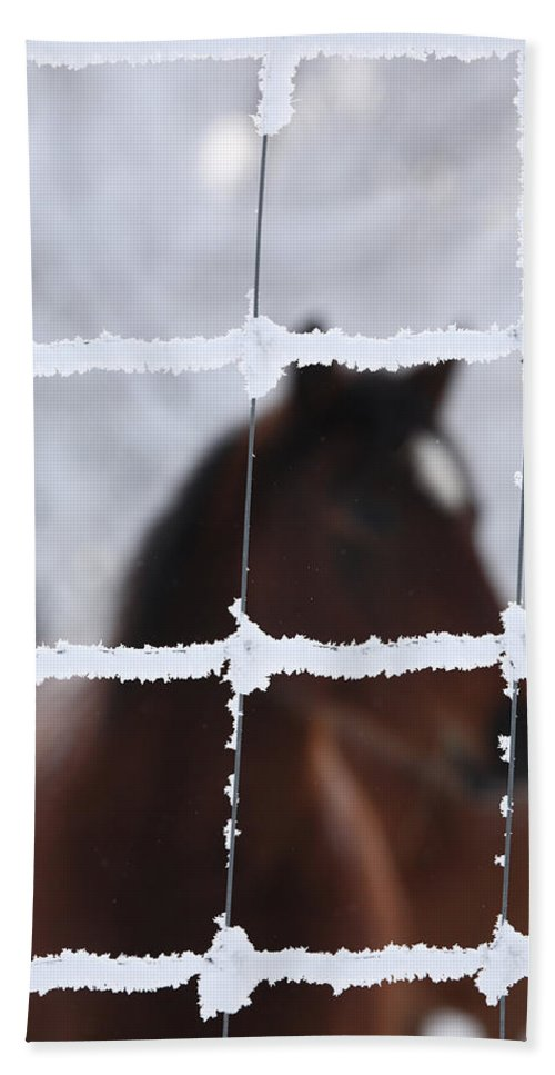 Horse Bath Sheet featuring the photograph Horse Viewed Through Frost Covered Wire Fence by Mark Duffy