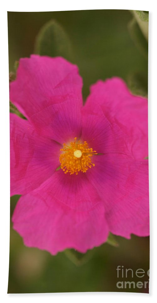 Pink Cosmo Photographs Bath Sheet featuring the photograph Hot Pink by Brooke Roby