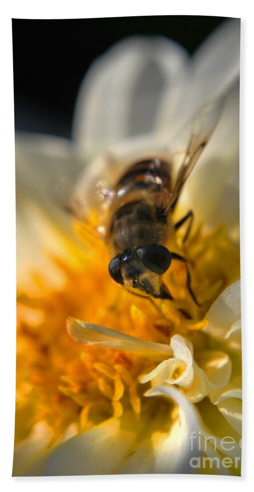 Yhun Suarez Hand Towel featuring the photograph Hoverfly On White Flower by Yhun Suarez