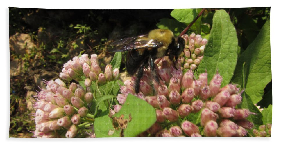 Insect Bath Sheet featuring the photograph Huge Bumble Bee by Donna Brown