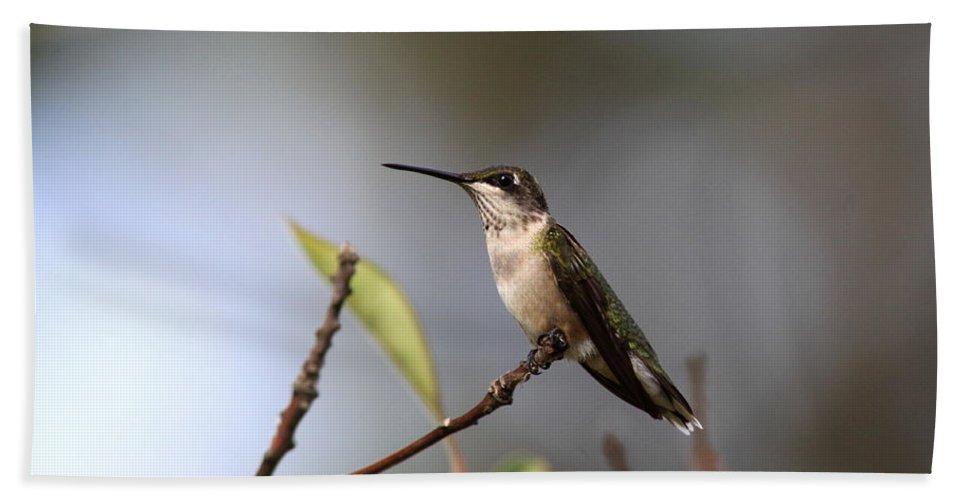 Hummingbird Bath Sheet featuring the photograph Hummingbird - Ruby-throated Hummingbird - Near The End by Travis Truelove