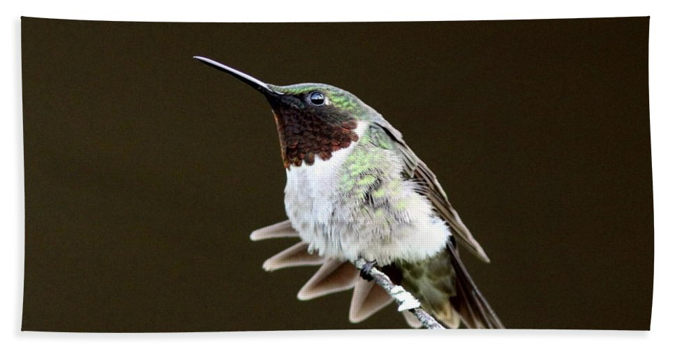 Hummingbird Bath Sheet featuring the photograph Hummingbird - Wide Tail by Travis Truelove
