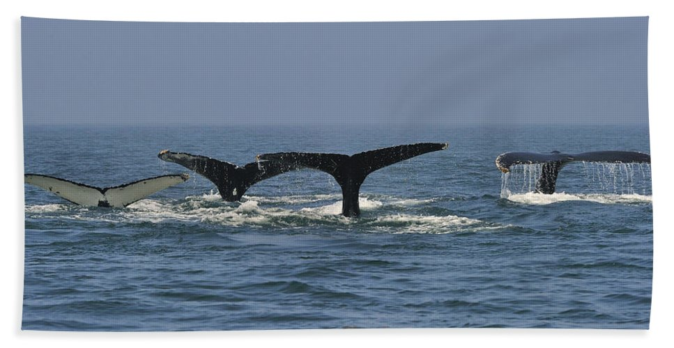 Humpback Whale Hand Towel featuring the photograph Humpback Flukes by Tony Beck