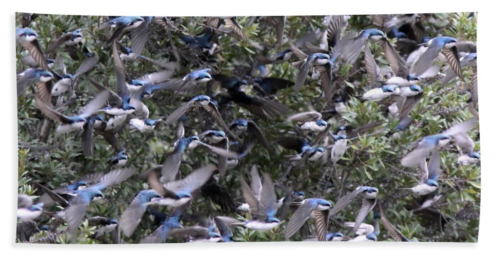 Tree Swallow Bath Sheet featuring the photograph Hundreds - Tree Swallows by Travis Truelove