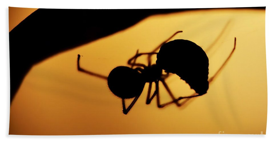 Spider Hand Towel featuring the photograph Hunter by Michal Boubin