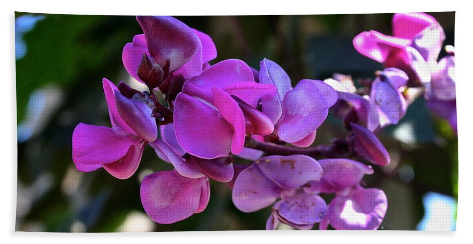 Outdoors Bath Sheet featuring the photograph Hyacinth Bean by Susan Herber
